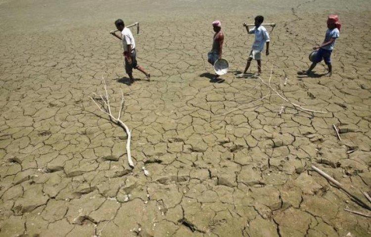 BM: Kenyalı çiftçiler hayatta kalmak için tüm mallarını satıyor